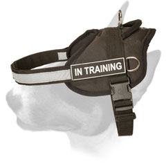 Multi-task nylon Bull Terrier harness