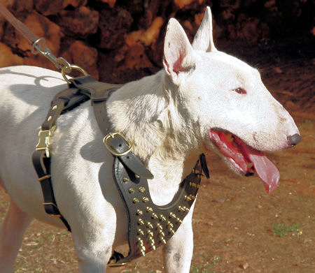 Comfortable leather dog harness. Practical Easy Handling Bull Terrier  harness