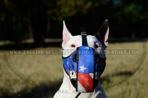 Leather muzzle for Bull Terrier
