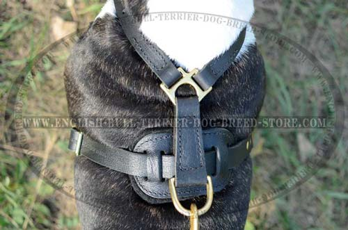 Dog harness with brass hardware