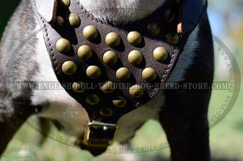 Bull terrier harness with wide chest plate