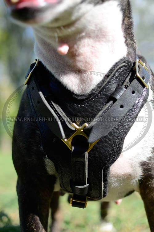 High quality leather dog harness