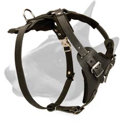 Leather dog harness for walking and training Bull Terriers