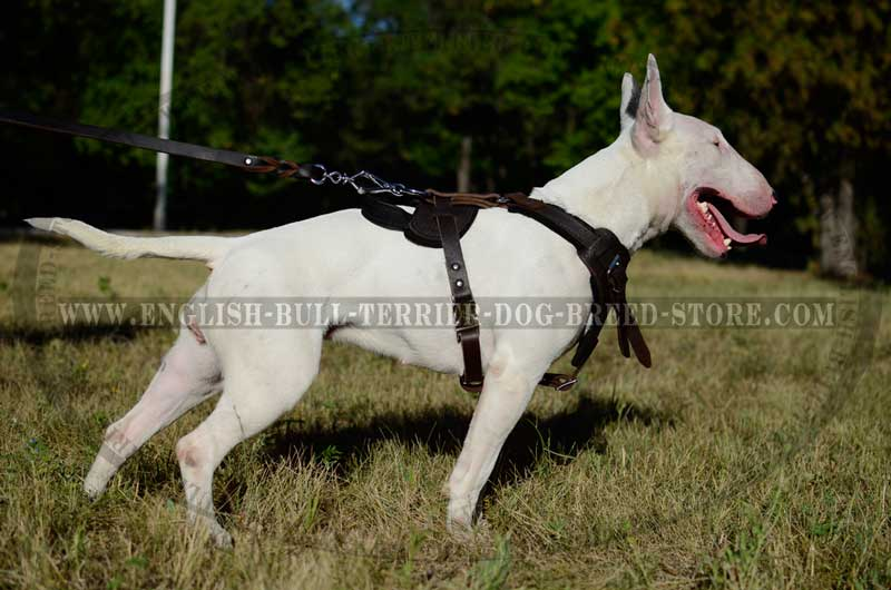 Best Adjustable Leather Bull Terrier Harness For Attack
