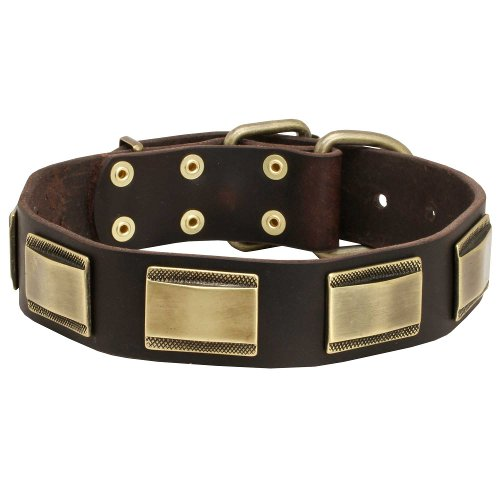 English Bull Terrier Gorgeous Leather Dog Collar with Beautiful Brass Plates