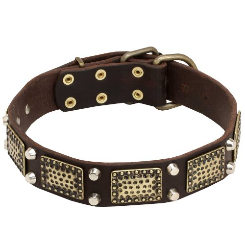 English Bull Terrier Vintage Style Pure Leather Dog Collar with Brass Decorations