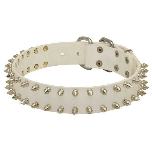English Bull Terrier Noble White Leather Dog Collar with Spikes