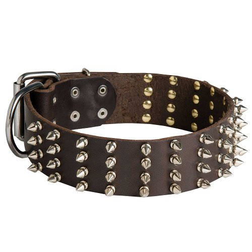 English Bull Terrier 2 inch Wide Leather Dog Collar with Spikes
