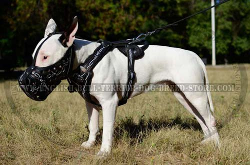 Bull Terrier leather muzzle breathable and comfortable