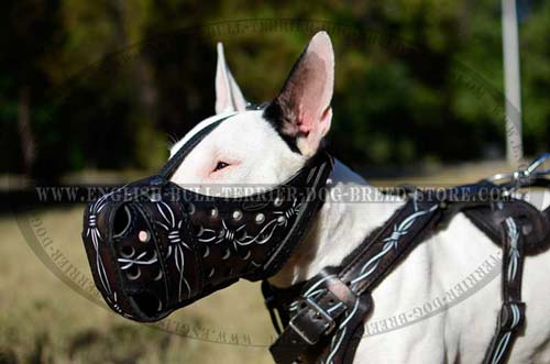 Bull Terrier muzzle with creative painting