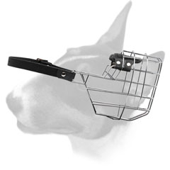 Wire Basket Muzzle for walking your Bull Terrier