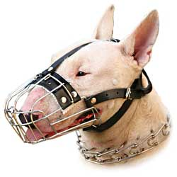 Everyday Metal Muzzle for Bull Terrier