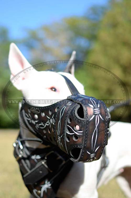 Stylish Leather English Bull Terrier Muzzle with Barbed Wire Painting