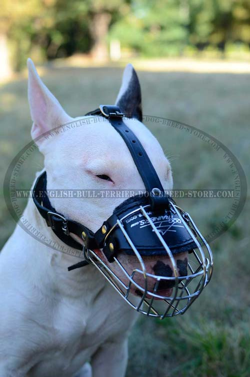 Perfect ventilation muzzle for your Bull Terrier