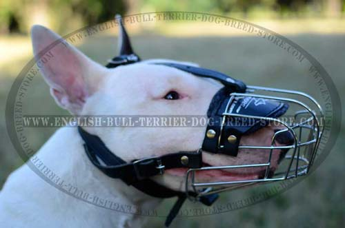 Bull Terrier Wire Basket Muzzle