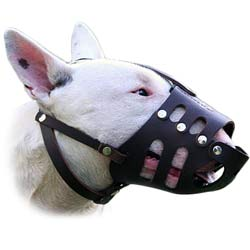 Bull Terrier Muzzle for various activities
