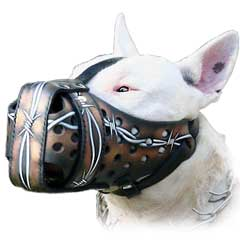 Bull Terrier Muzzle for stylish training sessions