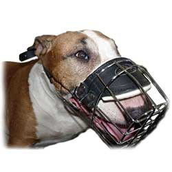 Wire Basket Muzzle perfectly fits Bull Terrier