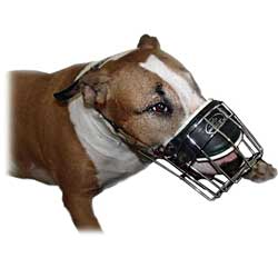 Bull Terrier wearing Metal Cage Muzzle