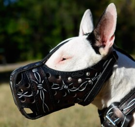How to Measure your Bull Terrier